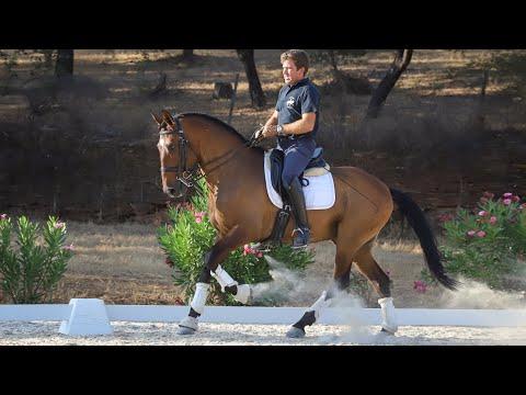 Horse for Sale   PSG Lusitano suitable for amateur (REF#278)