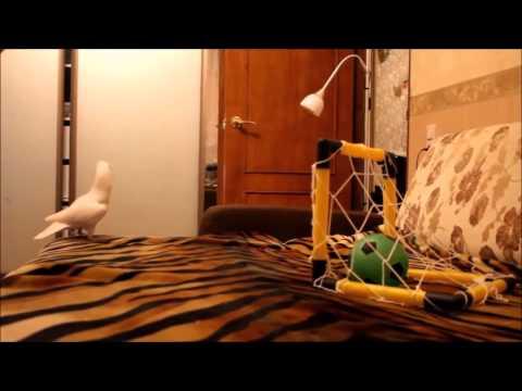 i am a bird motha f cker soccer bird remix
