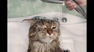 Коты собаки лучшие приколы Приколы с животными Смешное видео про животных