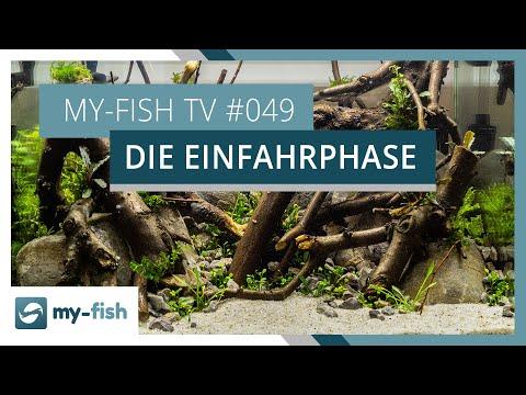 Die Einfahrphase im Aquarium | my-fish TV