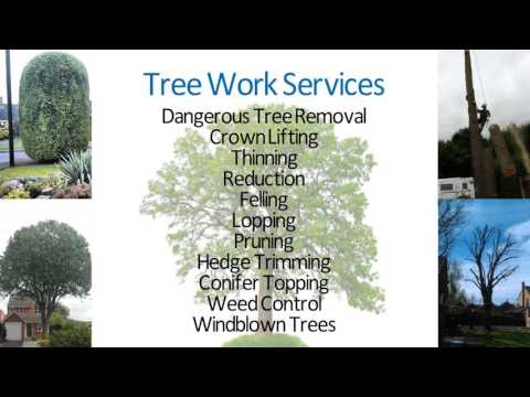 Tree Hugger & Son Tree Services & weed control