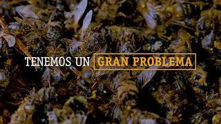 Imagina un mundo sin abejas... thumbnail