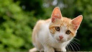 Какова Кошачья Жизнь и Животный Мир в Англии?