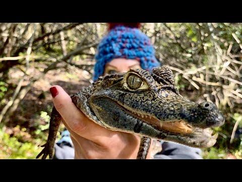 image for Savannah's Gatorland VLOGMAS Day 19!