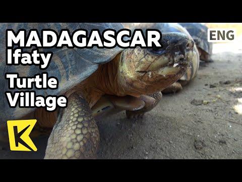 【K】Madagascar Travel-Ifaty[마다가스카르 여행-이파티]거북이 보호 공원/Turtle Village/Reserve Park/Animal