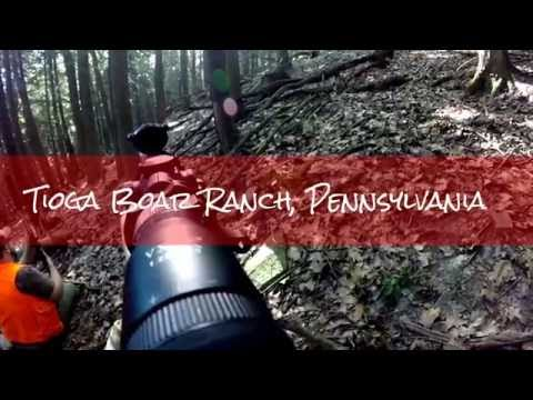 Tioga Ranch Russian Boar Hunt