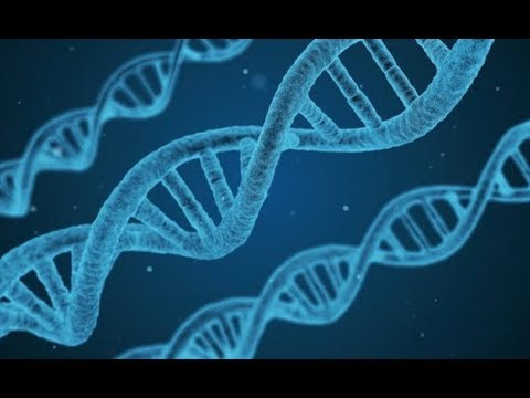 KTF News - DNA Research Pokes Holes in Darwin