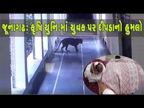 Video: Junagadh Agriculture University માં યુવક પર Leopard નો હુમલો | Vtv News