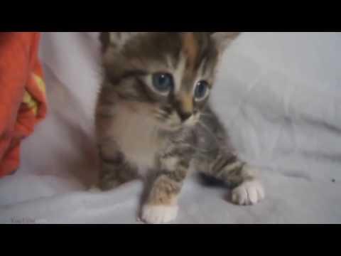 Lustige Katzen Videos Zum Totlachen (versuche Nicht Zu Lachen)