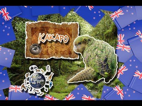 Kakapo  El loro más grande del mundo  (Animales del Mundo)  Especial países 