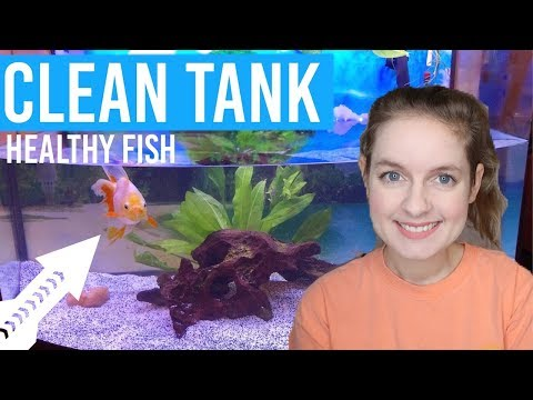 How To Keep Your Fish Tank Clean & Goldfish Healthy | 5 Top Tips