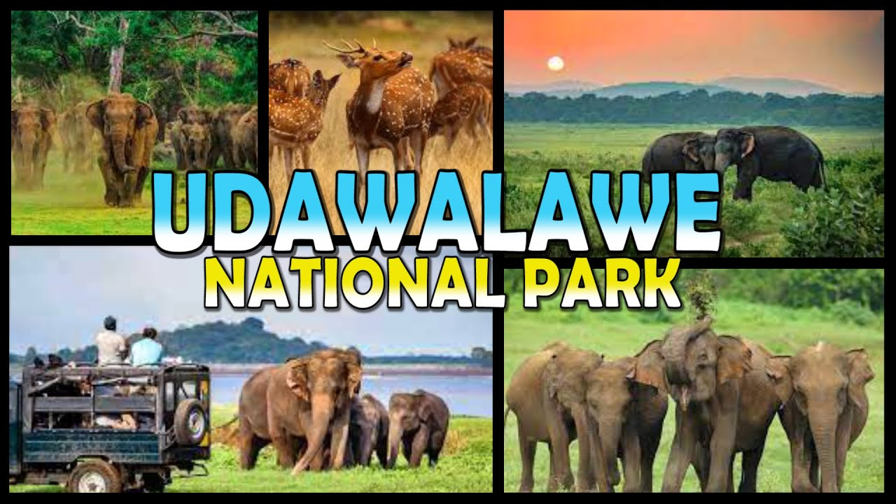 udawalawe national park safari sri lanka 4k youtube. Black Bedroom Furniture Sets. Home Design Ideas