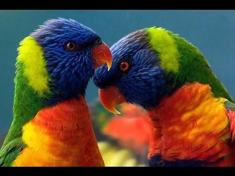 топ 10 самых красивых попугаев