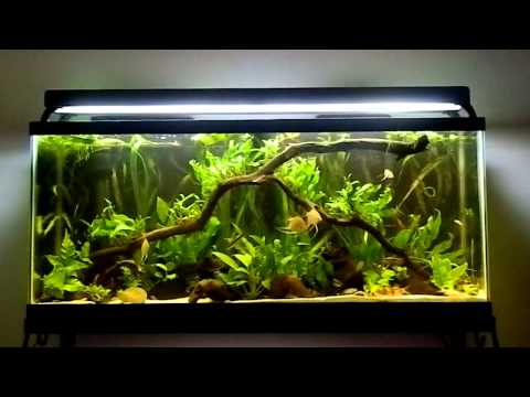 Fish tank question your most expensive fish youtube for Most expensive aquarium fish