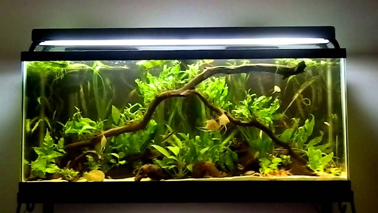 Fish tank question your most expensive fish youtube for Fish tank riddle
