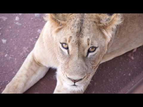 -Tanzania Safari 2017 in 4K-