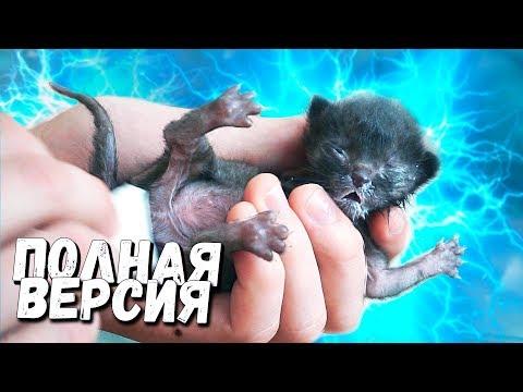 Спасение новорожденного котенка. Полная версия (English subtitles) / SANI vlog