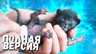 Rescue a newborn kitten. Full version / SANI vlog