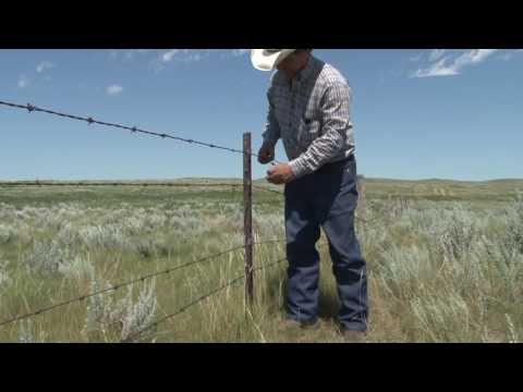 2016 Saskatchewan TESA - Anderson Ranch