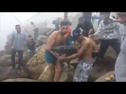 Mohammédia - Des jeunes remettent un dauphin à la mer