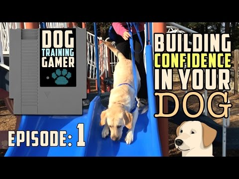How To Build CONFIDENCE In Your DOG!