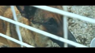 Самые трогательные видео с Животными  ДО СЛЁЗ!!! #1