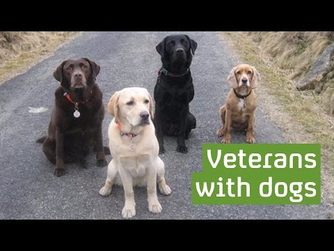 The dogs helping veterans overcome mental health issues