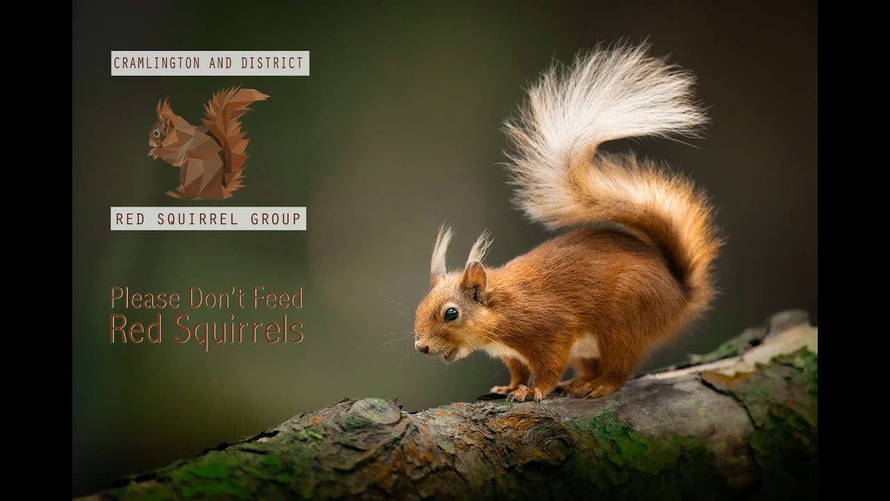 Please Don't Feed Red Squirrels