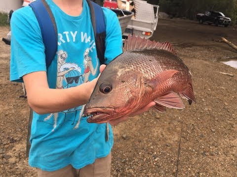 Fishing Gold Coast: Jacks, GH, Trevally