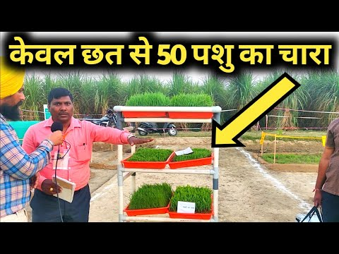 सस्ता हरा चारा पाने की कमाल तकनीक Hydroponic Grass Fodder farming in india Hindi