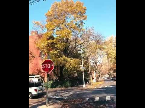 Fresh Day In NEW York