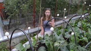 видео Огород в августе: основные работы на огородных грядках