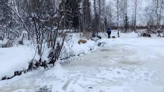 Лиса на зимней рыбалке