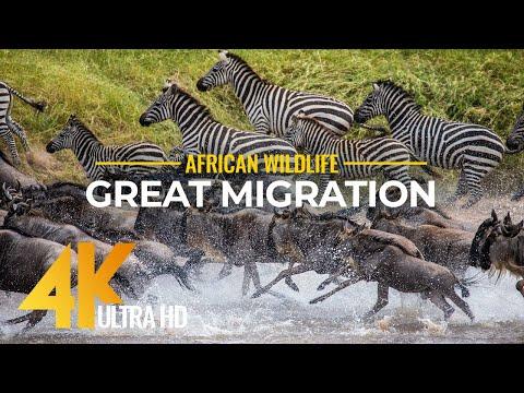 4K African Wildlife Footage from Maasai Mara Kenya. Episode 1