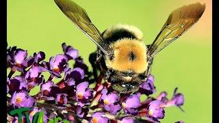 Características de las abejas - TvAgro por Juan Gonzalo Angel