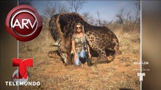 Indignación por cazadora que exhibió la jirafa que mató | Al Rojo Vivo | Telemundo