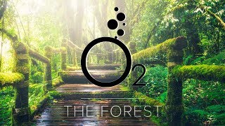 O2 - The Forest