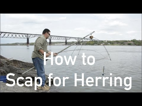 How To Scap For Herring | Striped Bass Shore Fishing - Part 3