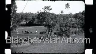 Rare video of Sri Lanka in the 1920's: farmers at work in their rice paddies