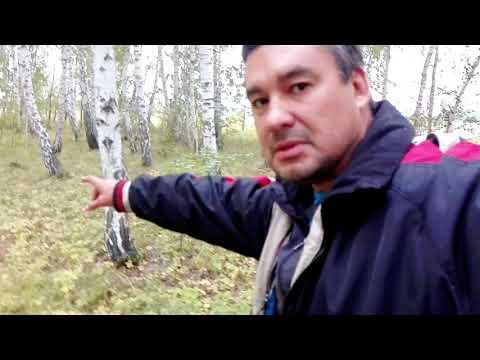 Встретил непонятное существо, в лесу ...