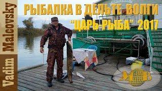 Рыбалка в дельте Волги.  База Царь рыба 2017. Ловля жереха, сазана, судака, сома  в низовьях Волги