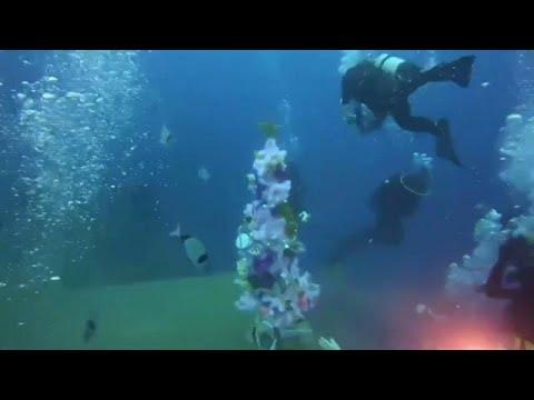 شاهد:  شجرة عيد الميلاد تزيّن قاع البحر قبالة السواحل القبرصية…  - نشر قبل 55 دقيقة