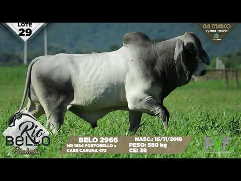 LOTE 29   BELO 2966