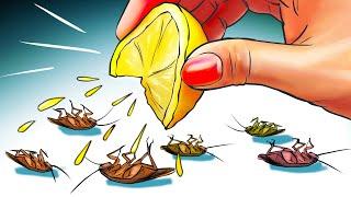 천연 재료로 바퀴벌레를 박멸하는 12가지 방법