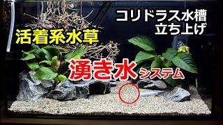 湧き水のあるコリドラス水槽立ち上げpart5 活着系水草