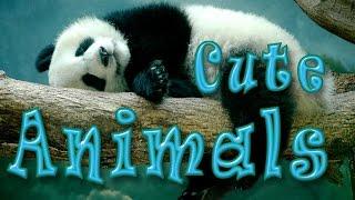 Cute Animals. Эти милые животные.