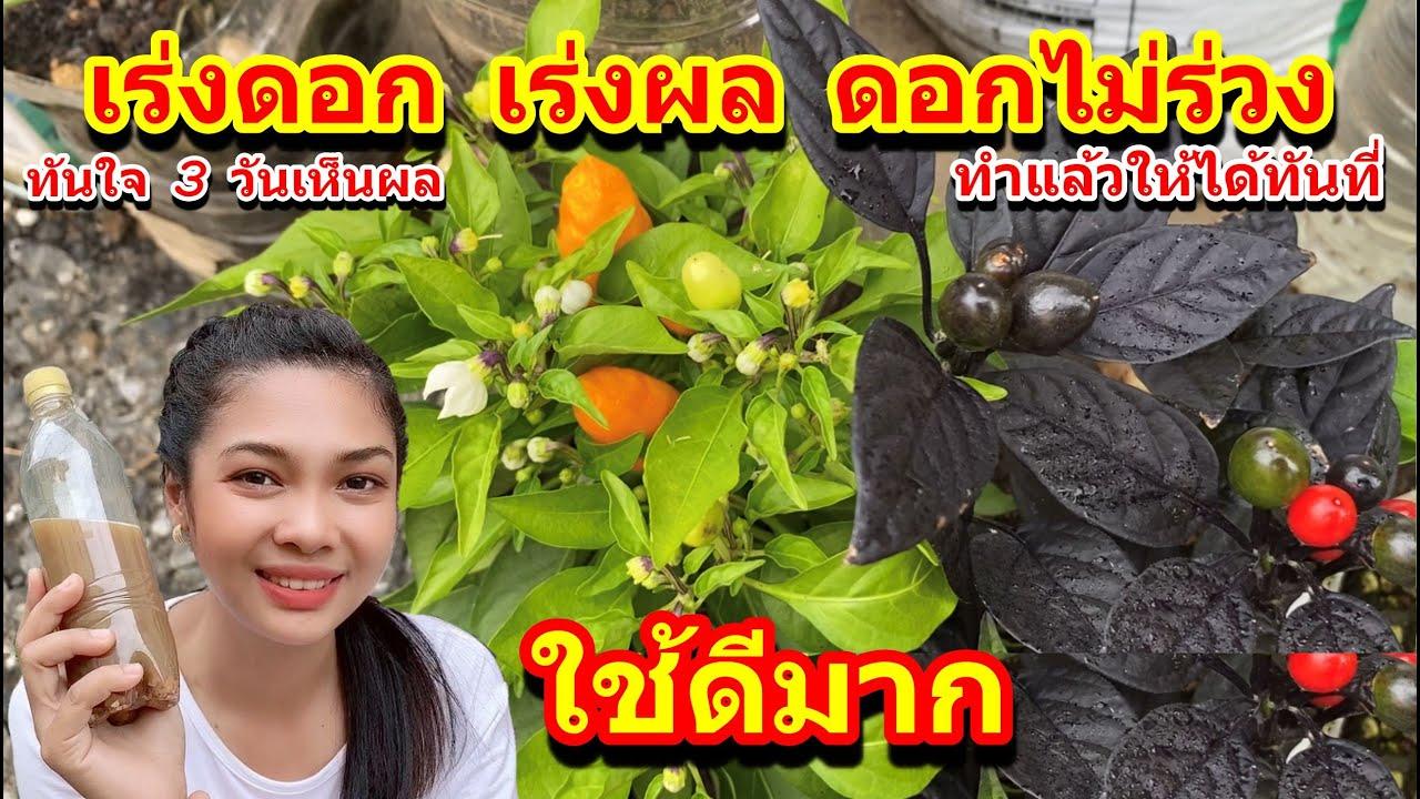 สูตรแก้ดอกร่วงในผักผลไม้ ขั้วเหนียว ดอกดกเวอร์ เร่งดอก เร่งผลเห็นผลใน 3 -7 วัน ทำแล้วให้ได้ทันที่