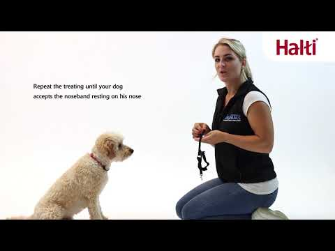 No Pull Training Your Dog with the Halti Optifit Headcollar