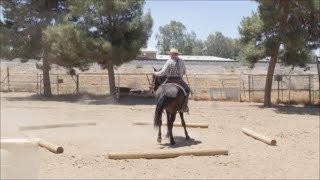 Oildale 1 Day Horsemanship Clinic - Afternoon Session