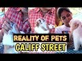 True Facts about GALIFF STREET KOLKATA || Must Watch to Know || Reality of Pets😱😨